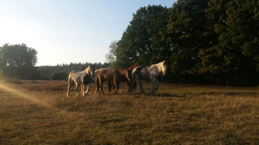 Paardencoaching